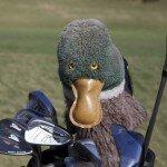 Maderas-Golf Sleeve Duck iPhoto